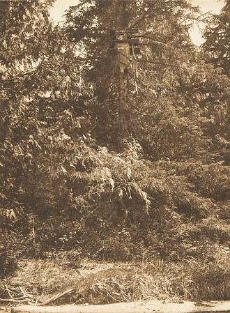 Tsawatenok Tree Burial (The North American Indian, v. X. Norwood, MA: The Plimpton Press, 1915)