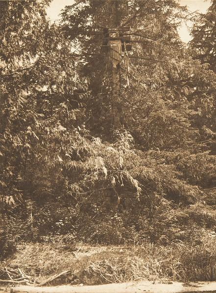 Tsawatenok Tree Burial (The North American Indian, v. X. Norwood, MA: The Plimpton Press, 1915)