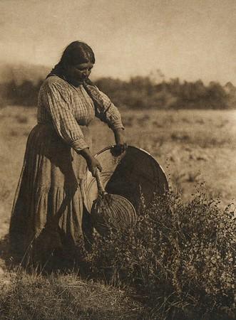 Gathering seeds - Coast Pomo (The North American Indian, v. XIV. Norwood, MA, The Plimpton Press, 1924)