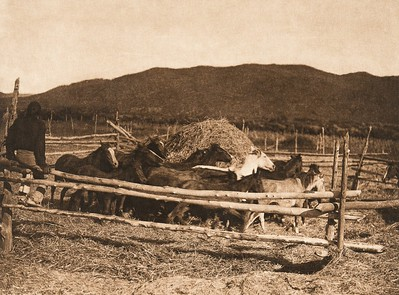 Threshing wheat - Taos (The North American Indian, v. XVI. Norwood, MA, The Plimpton Press,  1926)