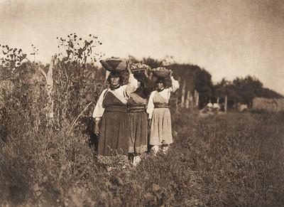 The harvest - San Juan (The North American Indian, v. XVII. Norwood, MA, The Plimpton Press,  1926)