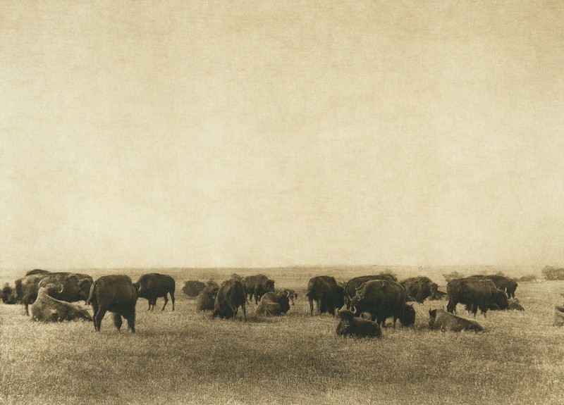 The buffalo plains (The North American Indian, v. XIX. Norwood, MA, The Plimpton Press,  1930)