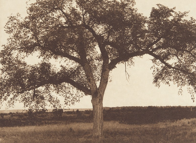The Mythic Tree [Hidatsa] (Indians of North America, v. IV. Cambridge, MA: The University Press, 1909)
