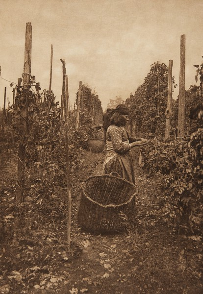 Hop Pickers - Puget Sound (The North American Indian, v. IX. Norwood, MA: The Plimpton Press, 1913)
