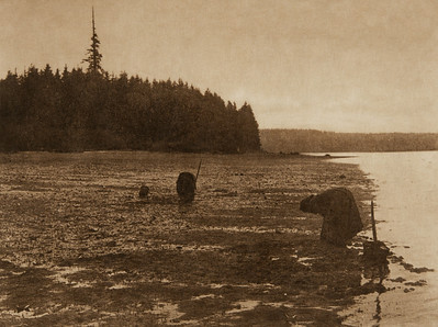 Digging Clams - Puget Sound (The North American Indian, v. IX. Norwood, MA: The Plimpton Press, 1913)