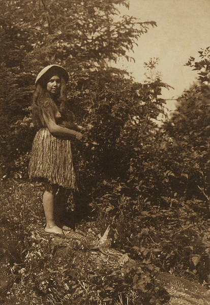 In the Forest - Quinault (The North American Indian, v. IX. Norwood, MA: The Plimpton Press, 1913)