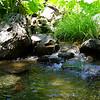 Eel River Wilderness Stream