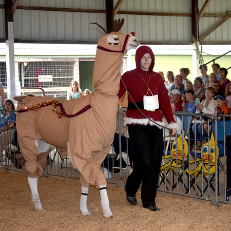 Lauren Jakubowski leads her llama, Snow, around the arena for the costume class portion of the 4-H llama show Friday. Kaitlin Cordes photo