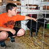 Brock Wendling pets a Pygmy goat at the Effingham County Fair. Kaitlin Cordes photo