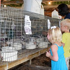 Siblings Layla, left, and Brody Nelson, center, pet rabbits in the 4-H exhibit barn on the Effingham County Fairgrounds as a 4-H exibitor tends to her rabbits. Kaitlin Cordes photo