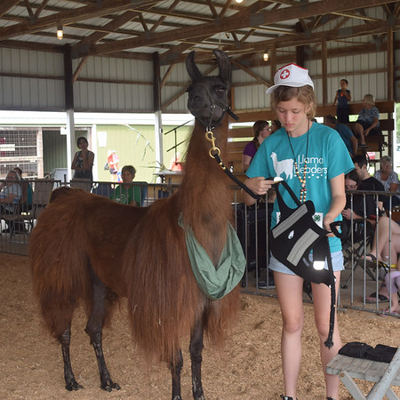 Madalyn Stead stops at a station during the public relations class portion of the 4-H llama show Friday at the Effingham County Fair. Kaitlin Cordes photo