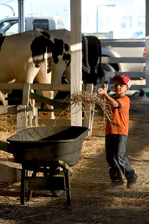 Five-year-old Otto VanDyke of Mason scoops straw into a wheelbarrow.<br /> Chet Piotrowski Jr. photo/Piotrowski Studios