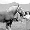 Louise Justice of Centralia is shown with the Champion Belgian gelding she exhibited at the 1967 Effingham County Fair. EDN file photo