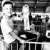 Kraig Soltwedel was first place winner in the 4-H show with his junior Spring Hampshire litter at the Effingham County Fair in 1988. EDN file photo