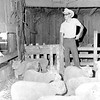 Terry Mefford of Louisville is shown with his Southdown sheep in 1973, a project that has given him many local and state livestock awards. EDN file photo