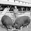 Hill and Sons farm in Lerna won 1949 Grand Champion awards for their Poland China sows. Mr. Hill stands in front of two Poland China sows which average about 860 lbs. each. EDN file photo