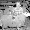 Jerry Haarmann is shown with his champion Montedale entry in 4-H competition at the 1967 Effingham County Fair. He won a champion ribbon and a trophy. EDN file photo