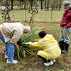 Jerry Katz, LoElla Baker and Howard Renfrow attempt to read a grave stone Thursday morning covered by a Yucca plant in Robinson Cemetery. Charles Mills photo
