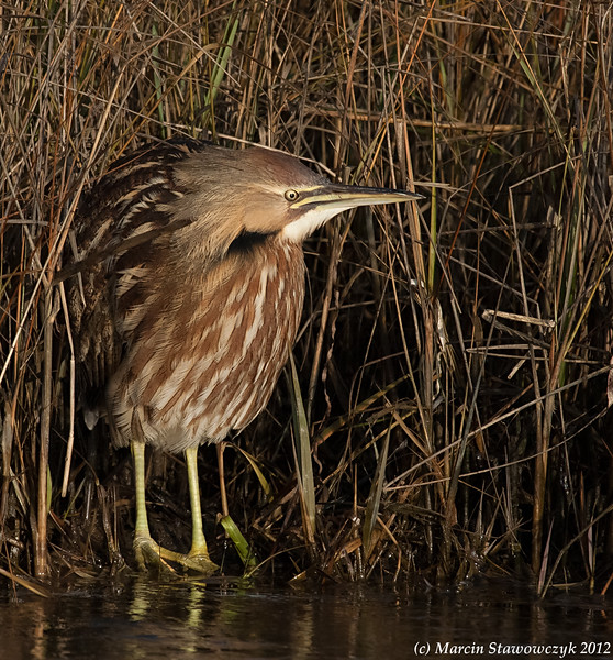 Out of the reeds