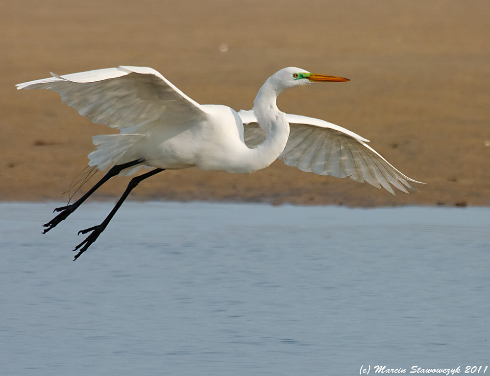 Sand water and egret