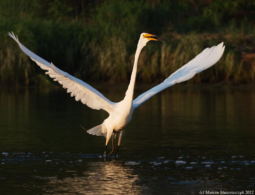 Majestic takeoff