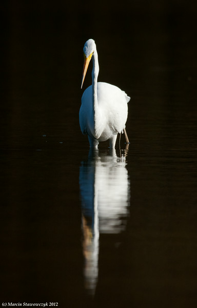 Double egret