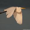 Egret over the sea