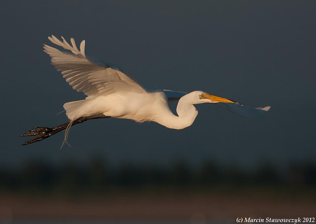 Big white glider