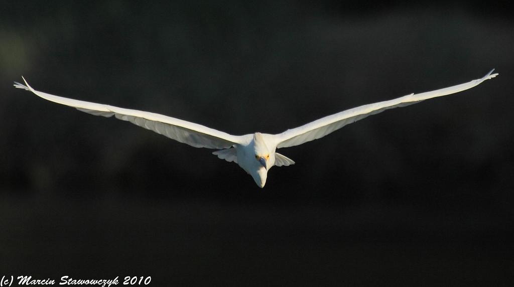 Flying straight