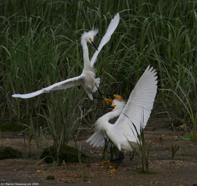 Egret karate