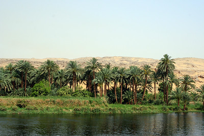 Palms along the Nile