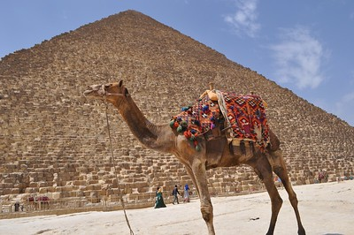 Nothing like a camel at the Great Cheops Pyramid.
