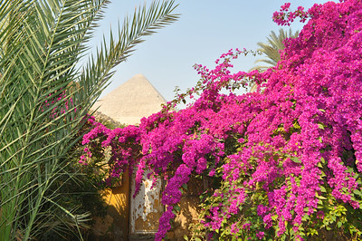 Welcome to the Magical House Air BnB located under the Great Pyramid where I've spent 5 magical days. Only $18/night.