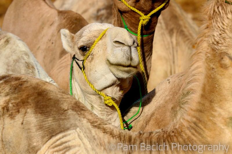 Camels and more camels