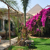 """The Magical House""  is a hot pick for accommodations close to the Great Pyramid that includes horse rides."