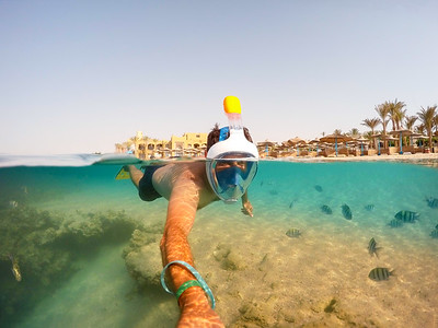 Snorkel swim in shallow water with coral fish, Red Sea, Egypt