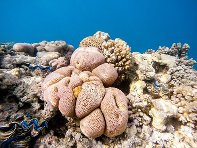 Coral garden in red sea, Marsa Alam, Egypt