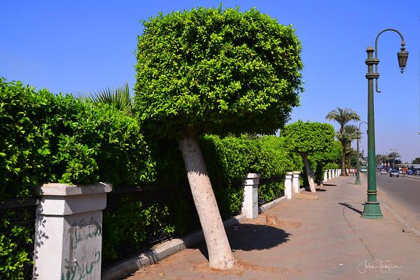 Along the Nile  on the Corniche El Nil