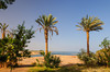 Palms trees on the shores of Lake Nassar near Abu Simbel, Egypt.