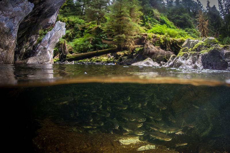 Alaska, diving,cold water