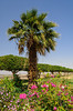 A palm tree and garden near the Aswan High Dam Visitor's Center, Egypt.