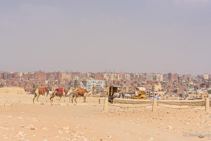 Camel Rides at the Great Pyramids