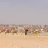 Camel Rides at the Great Pyramids