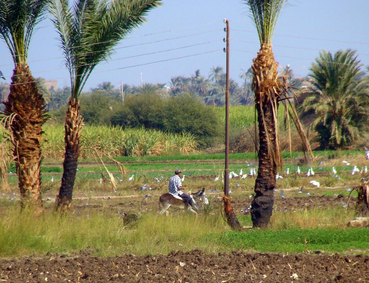Rural Luxor