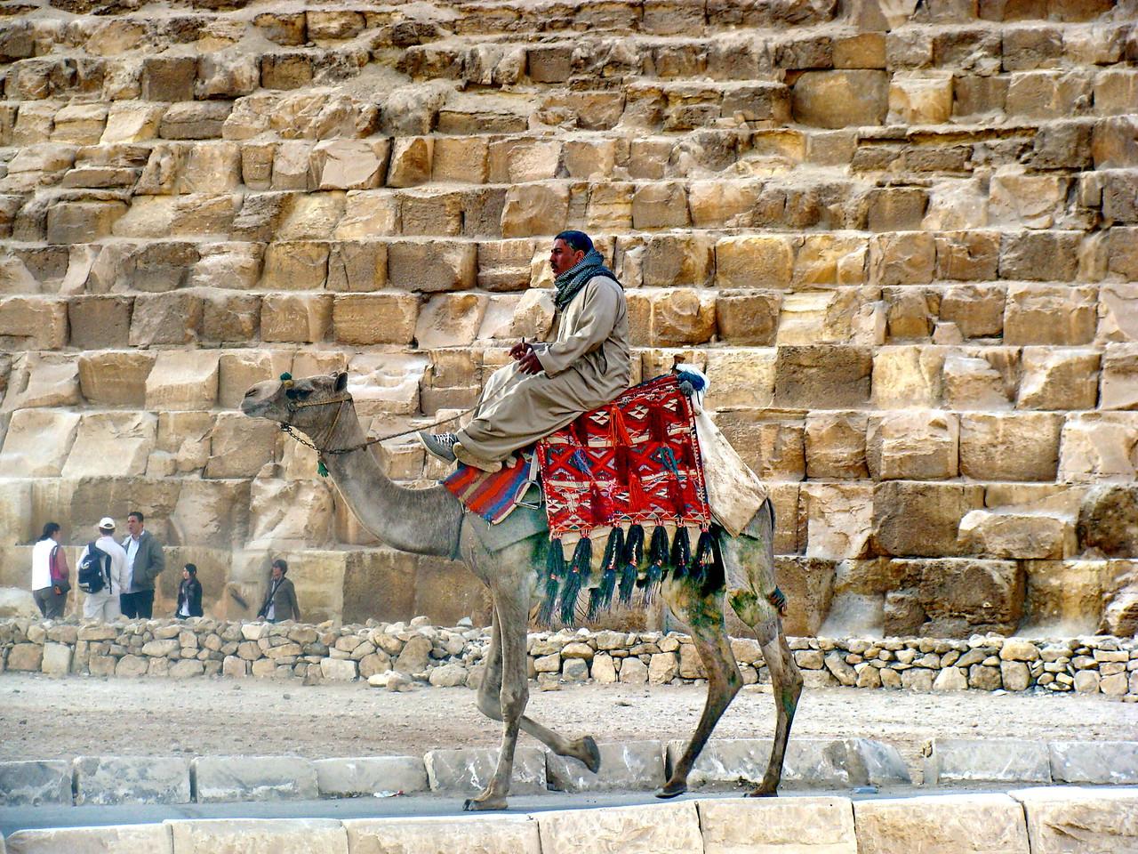 Camel at the Pyramids
