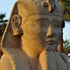 Evening light falling on the Head of a sphynx outside the ancient Luxor Temple in Egypt