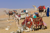 Camels available for rent in the desert of Giza near Cairo, Egypt.