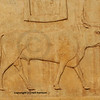 Pictogram carved in bas-relief of a sacred bull at Karnak, Luxor in Egypt