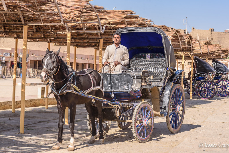 Transportation to the Temple of Edfu