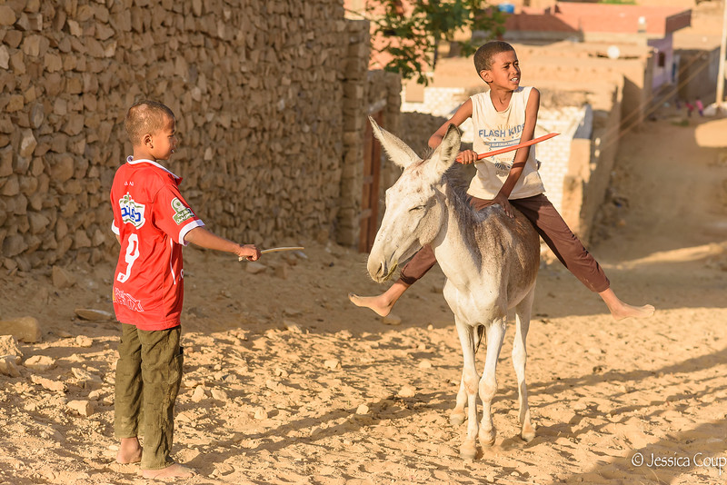Taming the Donkey